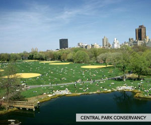 nyc_greatcp